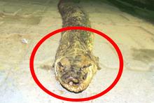 Tekirdağ'da bulundu 3 metre 20 santim uzunluğunda!