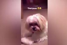 Herkes bu köpeği konuşuyor! Verdiği pozla sosyal medyayı salladı