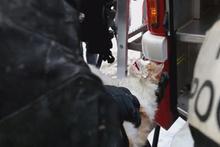 Dumandan zehirlenen kediyi kalp masajıyla hayata döndürdüler