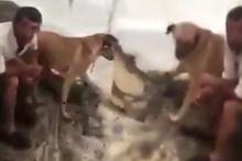 Mersin Tarsus'ta köpeğe tecavüz ederken yakalandı