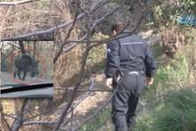 Samsun'da dev domuz alarmı! Polis alarma geçti