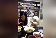 Yemek yemek isteyen köpek