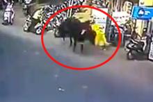Kızgın boğa kadına saldırdı