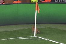Sahaya kedi girdi Beşiktaş golü buldu!
