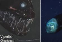 Dünyanın en derin noktasında inanılmaz canlılar