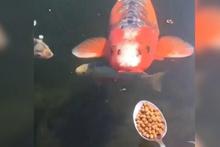Kaşıkla balık besleyen adam