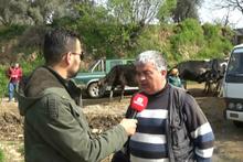 İnek sürüsünü gören muhabir röportajı bırakıp kaçtı