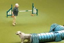 Sevimli köpek, sahibini şaşkına uğrattı