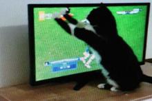 'Kedi Feyyaz'ın derbi heyecanı