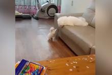 Yavrusuna atlamayı öğreten anne köpek