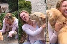 İki hafta göremediği dostunu gören köpekten muhteşem karşılama
