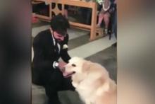 Böyle nikah töreni görülmedi! Köpeğin yaptığına bakın