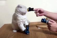 Kediye boks yapmayı öğretirsen sonu böyle olur