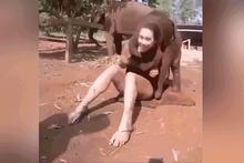 Yavru fil genç kadını az kalsın ölüyordu!
