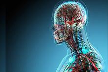 İnsan vücudunda yeni bir 'organ' keşfedildi