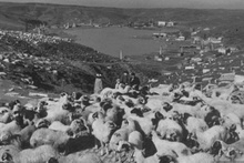 İstanbul 100 yıl önce böyleydi o ülkeden çıktı!