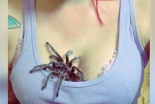 Göğsünde tarantula besleyen kadın