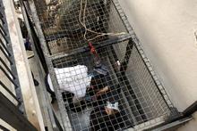 Asansörde can pazarı: Hamile kadın dehşeti yaşadı!