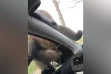 Maymunun yaptığına bakın! Kadın çığlıklar atmaya başladı