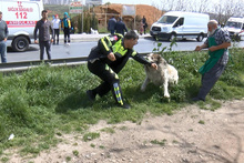 Tutanak tutmaya giden polise köpek saldırdı!