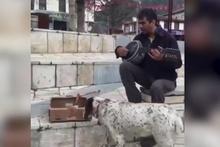 Köpek, sokak sanatçısının parasına göz koyarsa...