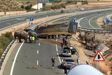 Kaza yapan araçtaki filler otoyolu kapattı