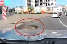 Sürücüyü şaşkına çeviren fare