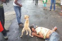 Yerde yatan insan dostunun yanına kimseyi yaklaştırmayan köpek