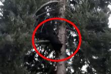Ağaçta 3 gün mahsur kalan kedi 3 saniyede inerek kaçtı