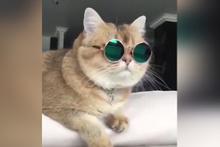 Dünyanın en havalı kedisi