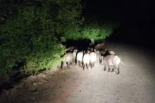 Aracıyla ilerlerken bir anda karşısına çıktılar!
