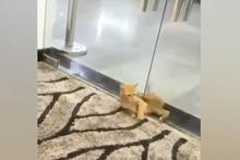 Görenler şoke oldu! Kedi küçücük delikten böyle geçti