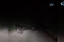 Tarlalara inen domuz sürüsü amatör kamerada