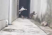 Pusuya düşürülen kedinin efsane kaçışı