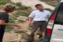 Köpeği otomobiliyle böyle ezmişti! Gözaltına alındı