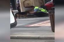 Elleriyle sokak köpeğine su içiren polis