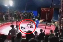Korkunç görüntü! Gösteri sırasında ayı bir anda saldırdı