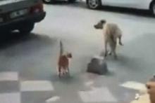 Adana kedisinin hareketleri sosyal medyada yayıldı