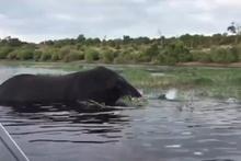 Turistlere kızan fil tekneye böyle saldırdı!