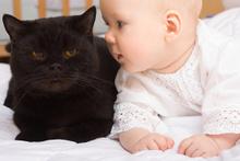 Norveç'de evcil hayvanı doğum yapana 3 gün izin