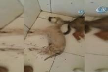 Hayvan barınağında yürek sızlatan görüntüler!