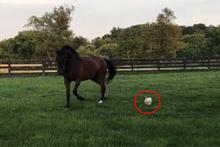 Atın arkadaşlık ettiği hayvanı görenler hayrete düşüyor