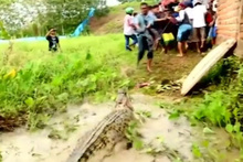 Endonezya'da korkunç timsah katliamı! Pala ve baltalarla öldürdüler