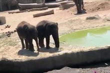 Yaramaz filden abisine hain tuzak