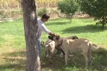 Bu kangal köpeğini bulana Antalya'da bir hafta tatil para ve..