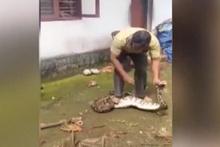 Yılanın yuttuğu tavukları böyle geri çıkarttı!
