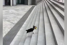 İlgi göremeyen köpeğin yaptığına bakın