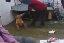 Yine hayvana şiddet! Komutlarına uymayan köpeği...
