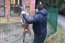 Kangurunun 'Sahte mehdi' ile imtihanı!