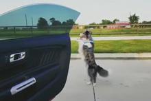Sevimli köpek o akıma uydu